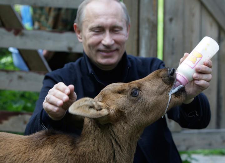 Vladimir Putin hayvansever