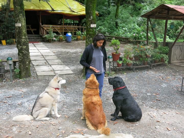 Çeşitli hayvanlar ile hayvanseverlik aşılanacak ve sorumluluk duyguları gelişecek
