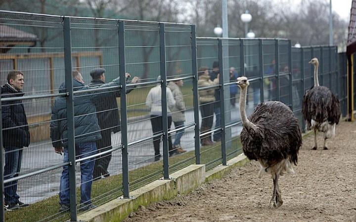 Eski Ukrayna Cumhurbaşkanı Viktor Yanukoviç Sarayı kişisel hayvanat bahçesi