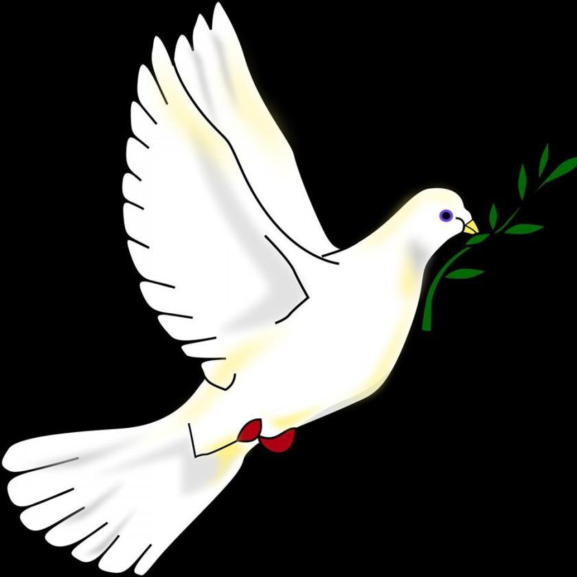 barış, güvercini, zeytin dalı