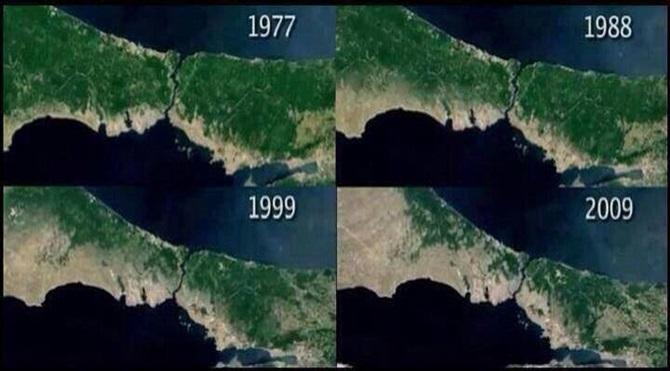 istanbul orman