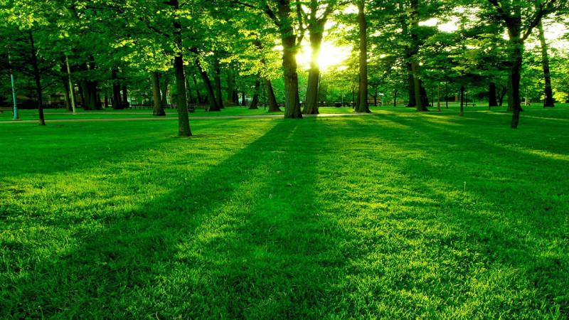yeşil renk ve anlamları